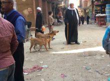بين كلاب الصفوة والشوارع.. نصف مليون حالة عقر خلال عام بمصر