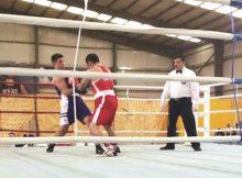 «أدعم الملاكمة» ينافس على ذهبية البطولة العربية