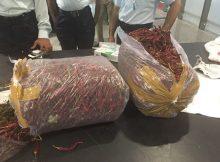«جمارك مطار حمد» تضبط ماريجوانا داخل حقيبة أحد المسافرين