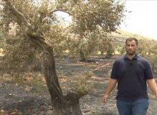 مستوطنون يضرمون النيران بأراض زراعية جنوبي نابلس