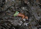 Brazil's mangroves on the frontline of climate change
