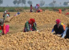 PepsiCo sues 4 farmers in India for growing potatoes it uses in Lays chips