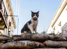 Australia plans to kill 2 million 'killer' cats